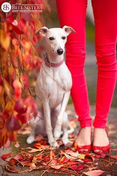 Falling For Autumn - Day 171/260 | by Sasha L'Estrange-Bell