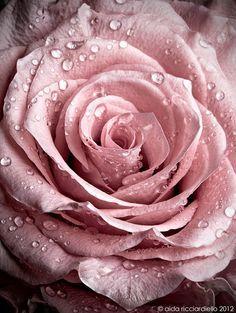 perles de rosée Plus