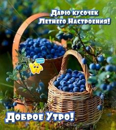 Wicker Baskets, Humor, Good Morning, Humour, Moon Moon, Funny Humor, Lifting Humor, Woven Baskets, Chistes
