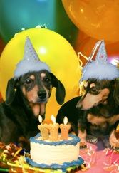"""Musical dachshund birthday card featuring the singing dachshund, Lucy Lou. Inside message: """"Happy birthday from the party animals! Animal Party, Party Animals, Musical Cards, Black And Tan Dachshund, Birthday Cards, Happy Birthday, Make Me Smile, Congratulations, Musicals"""