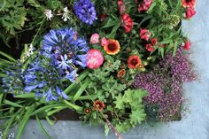 Kleurgebruik in de tuin - Eigen Huis en Tuin