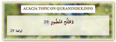 Browse Acacia Quran Topic on http://Quranindex.info/search/acacia #Quran #Islam [56:29]