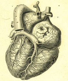 Medical_Illustration_Heart