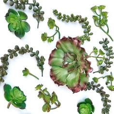 succulent cake decorations package