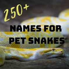 15 Best Cool pet names images in 2019 | Character names