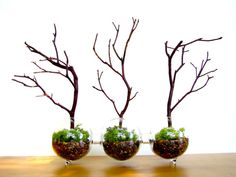 Modern Globe Manzanita Forest Moss Terrarium via Etsy. - how cool would this be with black twigs and grey irish moss for Halloween? Could decorate with little bats or black flowers Mini Terrarium, Terrarium Design, Terrarium Plants, Succulent Planters, Glass Terrarium, Hanging Planters, Succulents Garden, Air Plants, Indoor Plants