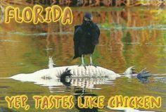 Mmmm... Tastes like chicken!