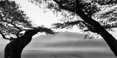 10번째 이미지 Contemporary Photographers, Landscape Photographers, Korean Art, Nature Photos, Black And White Photography, Sunset, Drawings, Painting, Outdoor