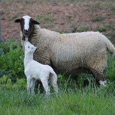 #sinfiltros #campo #aeropuertodejerez #natureza #amolanaturaleza #ovejas