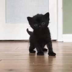 cuteness overload - Cute Cats and Kittens - Adorable Animals Cute Cats And Kittens, Baby Cats, I Love Cats, Kittens Cutest, Black Kittens, Pretty Cats, Beautiful Cats, Animals Beautiful, Cute Funny Animals