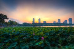 Sunset Above the Lotus