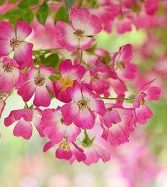 Justbelieve2him 3 flower pinterest zinnias flowers and flower natalca mightylinksfo