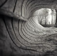"larameeee: ""  A leaf's point of view… Photography by Maria Ibdah """
