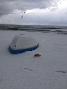 Tomuk te kar yagdiginda