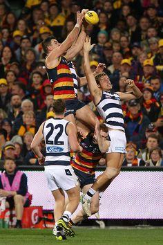 AFL 2017 Round 18 - Adelaide v Geelong - AFL.com.au Crows, Football Team, Orlando, Sports, Ravens, Hs Sports, Raven, Orlando Florida, Football Squads