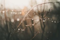 Image discovered by kbhkk. Find images and videos about mathias eis schultz on We Heart It - the app to get lost in what you love. Out Of Focus, Water Drops, Weed, Find Image, Water Droplets, Marijuana Plants
