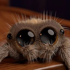 cool Meet Lucas, The Most Adorable Spider That Will Cure Your Arachnophobia