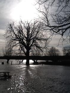 Flooded Meadowside Garden, January 2014