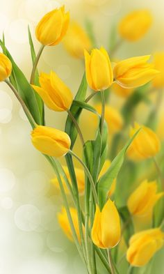 Tulipanes amarillos Whenever we approached the Flores & Prats organization, we needed to target on Yellow Spring Flowers, Yellow Tulips, Tulips Flowers, Daffodils, Beautiful Flowers, Paper Flowers, Tulips Garden, Planting Flowers, Tulips Images