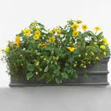*Google Image Result for http://www.gardenideas.com/images/content/window_box_yellow.jpg