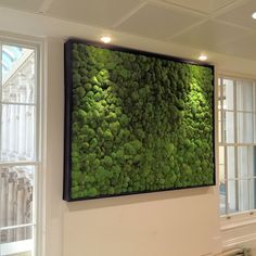 Bright Green - Bun Moss Walls Still Popular