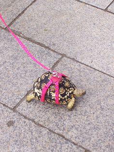 turtles on a lesh | turtle_leash.jpg
