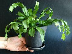 Celery, Flower Pots, Stoneware, Herbs, Ceramics, Vegetables, Flower Vases, Ceramica, Plant Pots