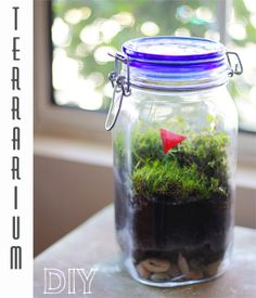 DIY, self sustaining jar terrariums? Yes, please. SO cute I want to deco my kitchen window sill with some of these.