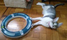 |So cute, Agatha playing!!