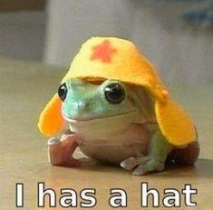 34 Fantastic Frog Memes For Amphibian Enthusiasts