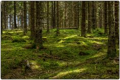 """""""Green Forest"""""""