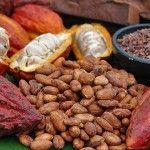 La exposición Ciencia con sabor a Chocolate se presenta en el MUTEC hasta el próximo 23 de febrero.
