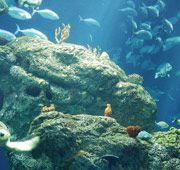 The South Carolina Aquarium