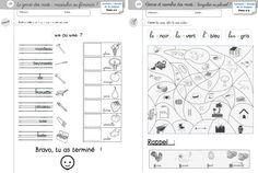 Etude de la langue CP - Le genre et le nombre - Cycle 2 ~ Orphéecole