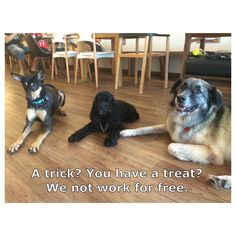 Olive, Lucy and lulu go on trick strike  Thefurrytales.wordpress.com