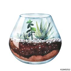 Watercolor illustration. Composition of succulents. Floral design. Terrarium for succulents and cacti. Open glass sphere. Round transparent vase. Isolated on white background. Home flower. Home Decor.