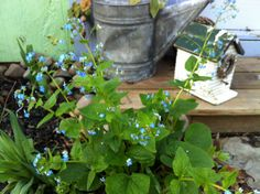 """I planted these """"Forget-Me-Nots"""" to remind me of my dad every time I enter my sweet little cottage."""