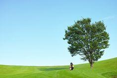 A tree #1