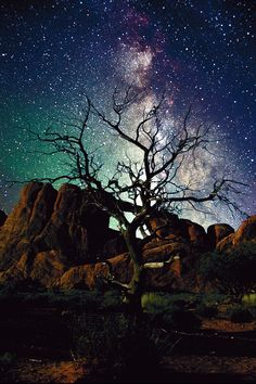 Lone Tree In Utah by Arthur Rosch - Skyline Arch, Arches National Park, Utah