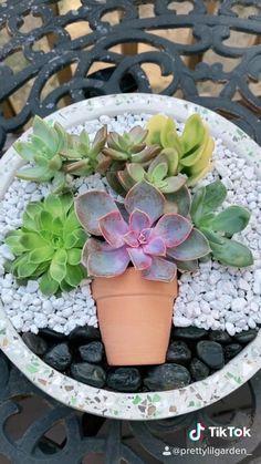 Succulent Bowls, Succulent Planter Diy, Succulent Gardening, Succulent Arrangements, Pink Succulent, Succulent Ideas, Succulents In Containers, Cacti And Succulents, Planting Succulents