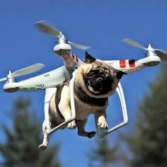 New feature for the Phantom 3 drone! Dogs can now be delivered by drones. #Joke #Humor #Pugs #Puppies                                                                                                                                                                                 Más
