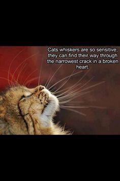 Cats whiskers are so sensitive; they can find their way through the narrowest crack in a broken heart.