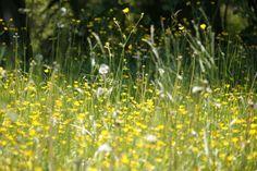 As alergias podem matar? 12 verdades e mentiras | SAPO Lifestyle