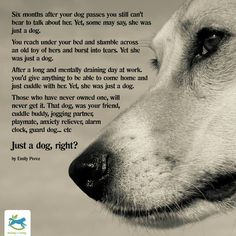 I can say the same about all my beloved pets; waiting for me on the Rainbow Bridge.So true. I Love Dogs, Puppy Love, Cute Dogs, Pet Sitter, Pet Loss Grief, Image Jesus, Dog Poems, Pet Remembrance, Animal Quotes