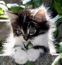Tired kitten -adorable!