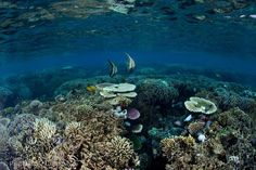 Coral gardens in the early morning light at Kanawa Island near Flores, Indonesia.