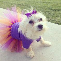 Pretty in purple. #LSU