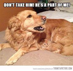 Don't take him…