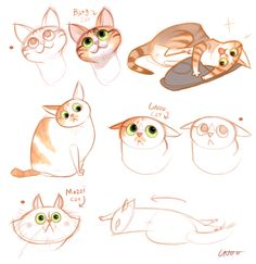 My Cats More
