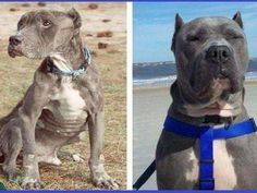 Rescue Dogs Before & After | Pictures of Adopted Dogs